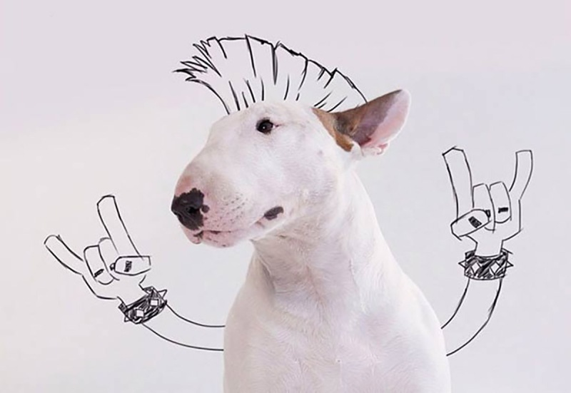 Jimmy-the-Bull-Terrier2__605-copia.jpg